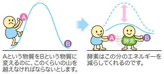 B6 効果 ビタミン